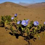 Un fiore contro la desertificazione industriale