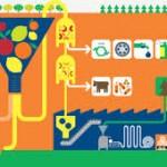 Certificazioni: quali norme internazionali sono utili per le aziende agroalimentari?