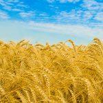 Perché l'agroalimentare italiano deve puntare sulla qualità per conquistare i mercati esteri