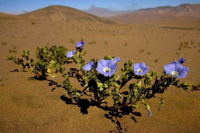 fiori-del-deserto-1