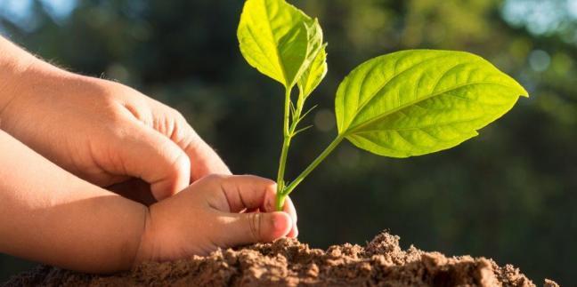 Perché la sostenibilità è più di un valore sociale; è un vantaggio competitivo.